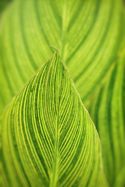 Photograph - Green Leaf Abstract  by Saija Lehtonen