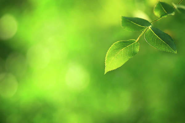 Environmental Issues Photograph - Green Leaf - Defocused Background by Konradlew