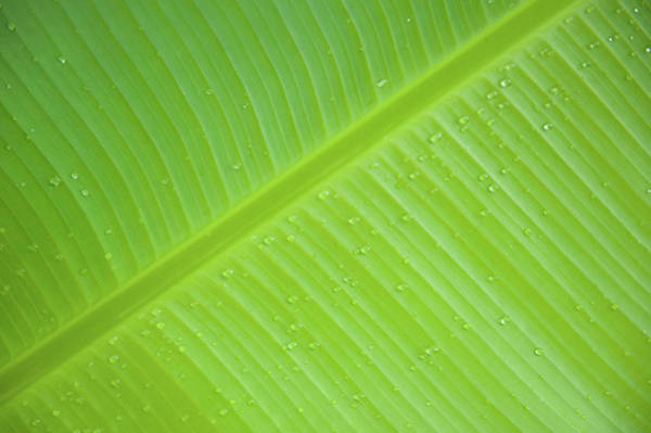 Photograph - Green Leaf Markings IIi by Helen Northcott
