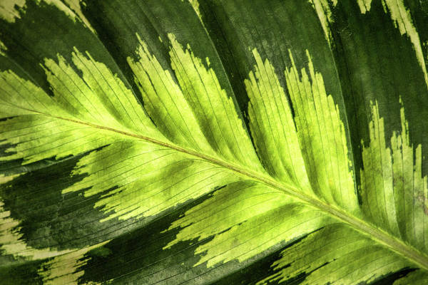 Photograph - Green Leaf Patterns by Don Johnson