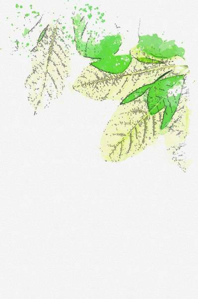 Wall Art - Painting - Green Leafed Plants 2 -  Watercolor By Adam Asar by Celestial Images