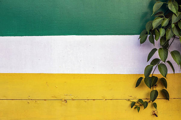 Photograph - Green Leaves And Negative Space by Prakash Ghai