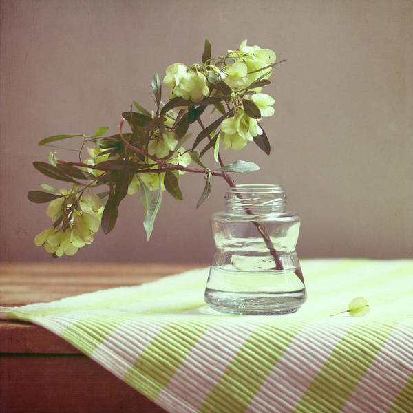Jar Photograph - Green Leaves In Glass Jar And Tablecloth by Copyright Anna Nemoy(xaomena)