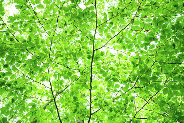 Wall Art - Photograph - Green Leaves by Johnnygreig