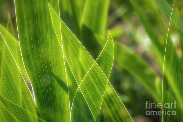 Wall Art - Photograph - Green Leaves by Veikko Suikkanen