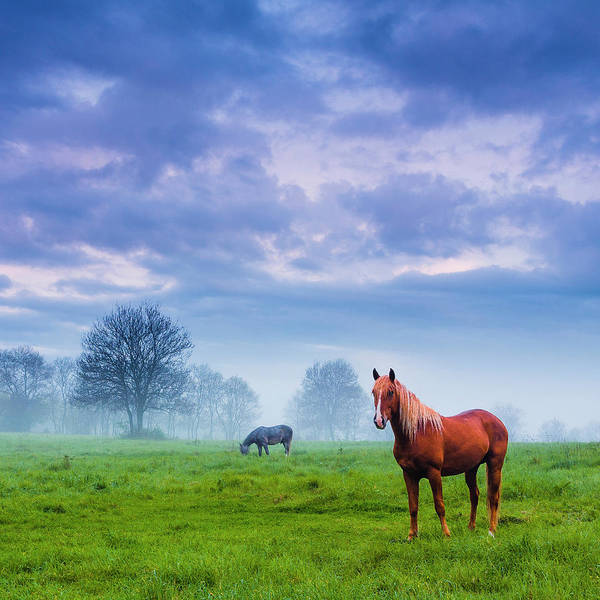 Wall Art - Photograph - Green Morn by Evgeni Dinev