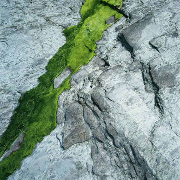 Determination Photograph - Green Moss On Silvery Stone by Micha Pawlitzki