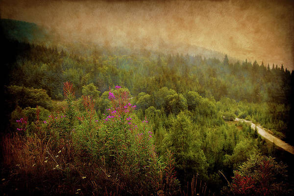 Photograph - Green Mountains by Milena Ilieva