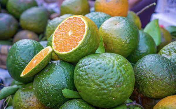 Photograph - Green Oranges by Gary Gillette