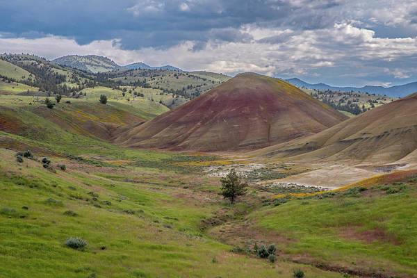 Photograph - Green Painted Hills  by Matthew Irvin
