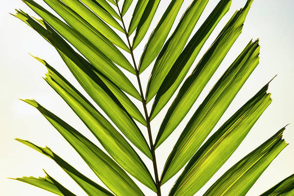 Photograph - Green Palm by Christopher Johnson