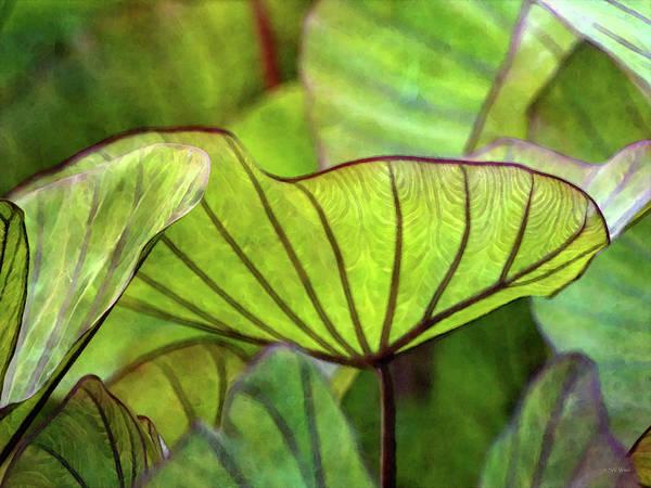 Photograph - Green Patterns 5154 Idp_2 by Steven Ward