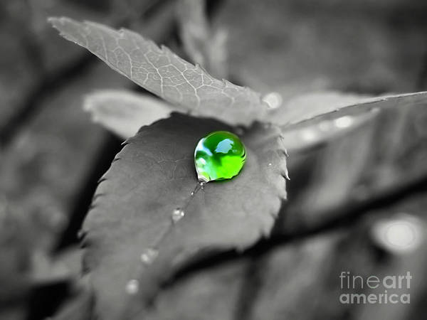 Photograph - Green Pearl by Patti Whitten