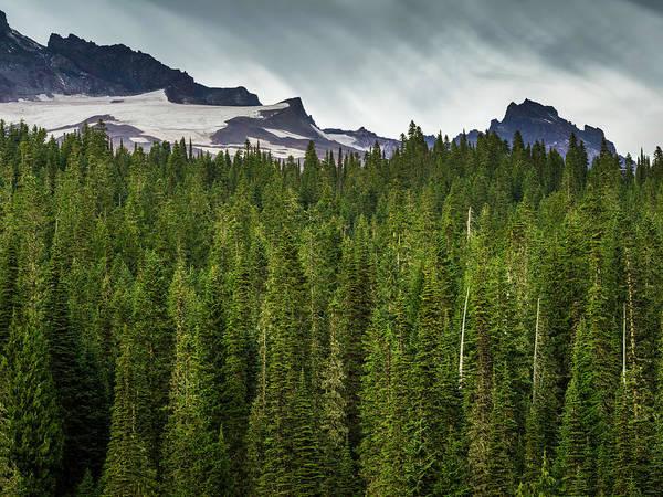 Green Pine Trees At Mt. Rainier Art Print