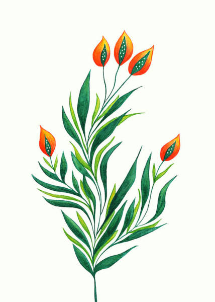 Floral Watercolor Drawing - Green Plant With Orange Buds by Boriana Giormova