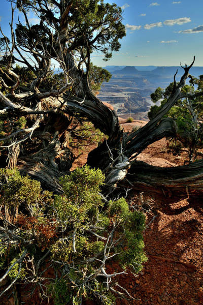 Photograph - Green River Overlook In Canyonlands Np by Ray Mathis