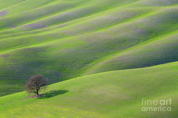 Photograph - Green Rolling Grassland by Heiko Koehrer-Wagner