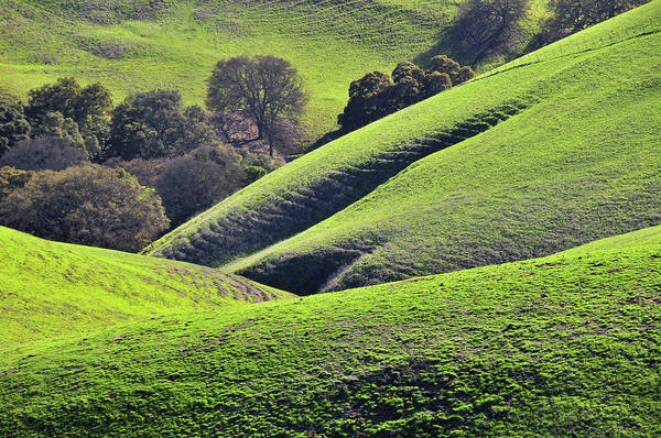 Livermore Wall Art - Photograph - Green Rolling Hills Of Central by Mitch Diamond