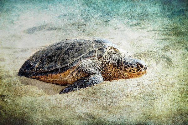 Photograph - Green Sea Turtle Sunning by Belinda Greb