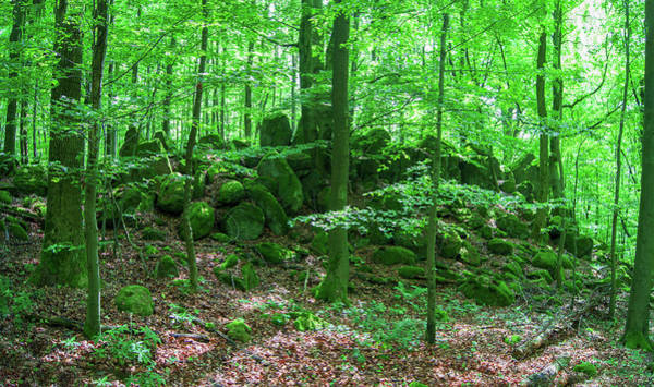 Photograph - Green Stony Forest In Vogelsberg by Sun Travels
