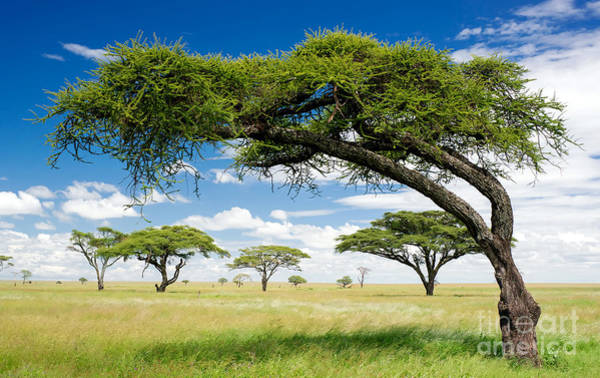 Wall Art - Photograph - Green Trees In Africa, After The Rainy by Shuttjd