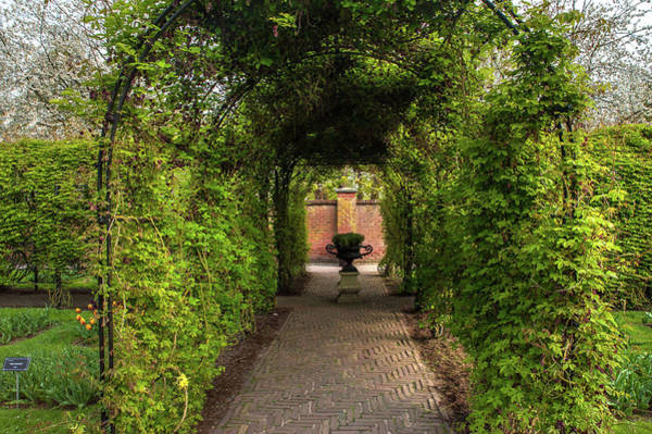 Photograph - Green Tunnel In Keukenhof by Jenny Rainbow