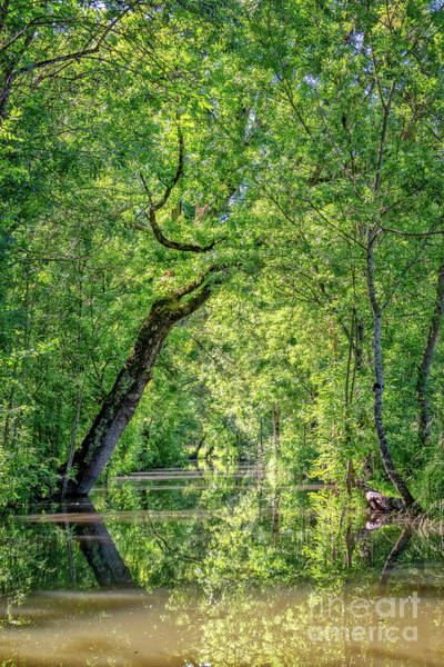 Wall Art - Photograph - Green Venice by Delphimages Photo Creations