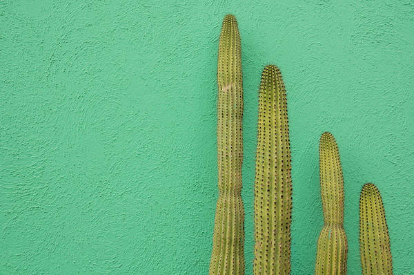 Mexico Photograph - Green Wall And Cactus by Joanna Mccarthy