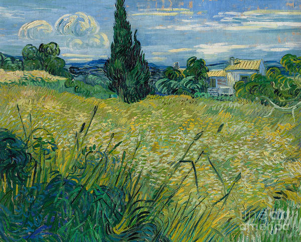 Wall Art - Painting - Green Wheat, 1889 By Vincent Van Gogh by Vincent Van Gogh