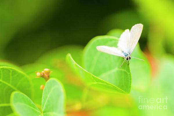 Beautiful Butterfly Photograph - Green Wilderness by Jorgo Photography - Wall Art Gallery