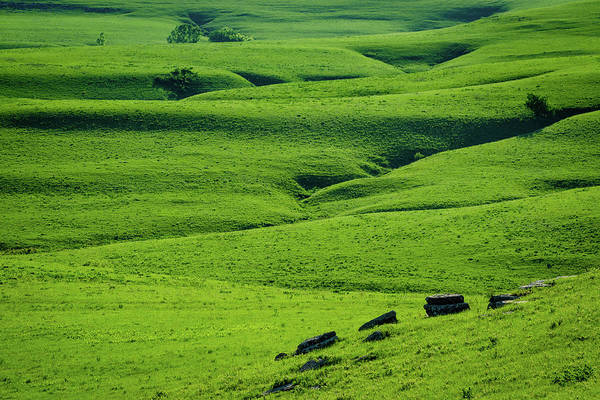Photograph - Green Wrinkles by Jeff Phillippi