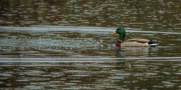 Photograph - Greenhead Bubbles by Dale Kauzlaric