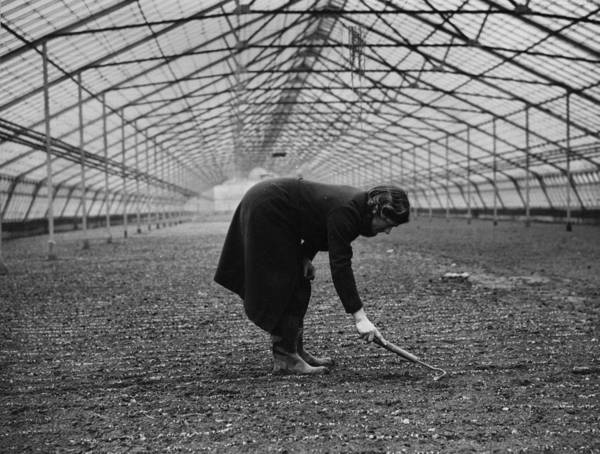 Farm Photograph - Greenhouse Gardening by Maeers