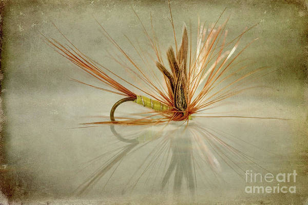 Fishing Line Photograph - Greenwells Glory Dry Fly by John Edwards
