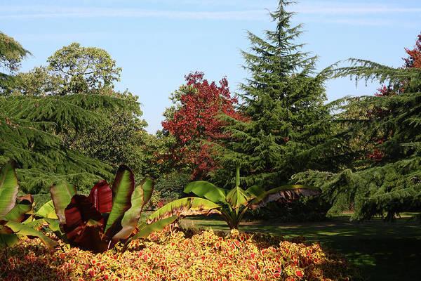 Photograph - Greenwich Park Gardens, London by Aidan Moran