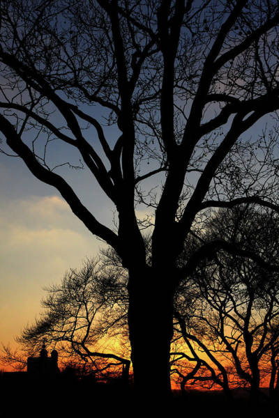 Photograph - Greenwich Park Sunset  by Aidan Moran