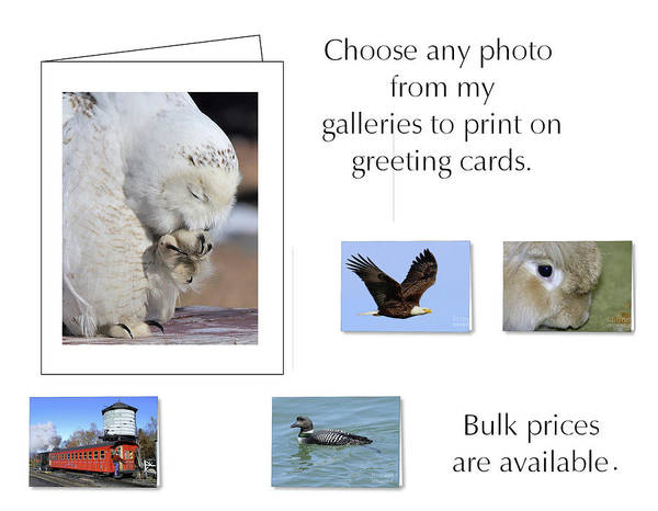 Photograph - Greeting Cards by Debbie Stahre
