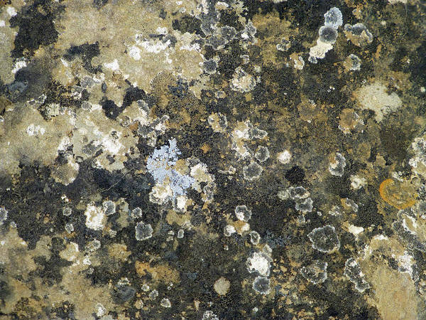 Photograph - Grey And Ochre Universe by Cris Fulton