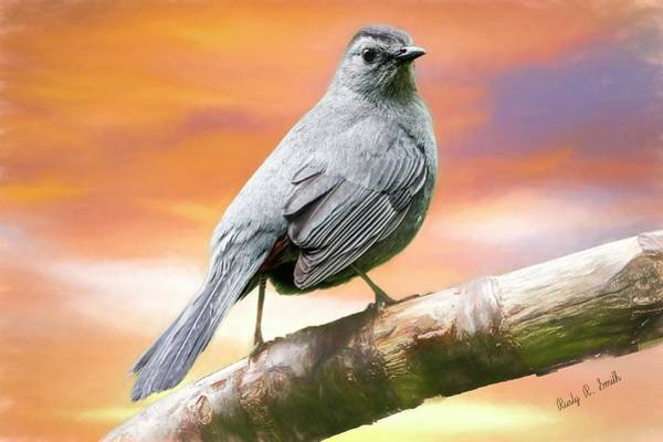 Digital Art - Grey Catbird Art Portrait by Rusty R Smith