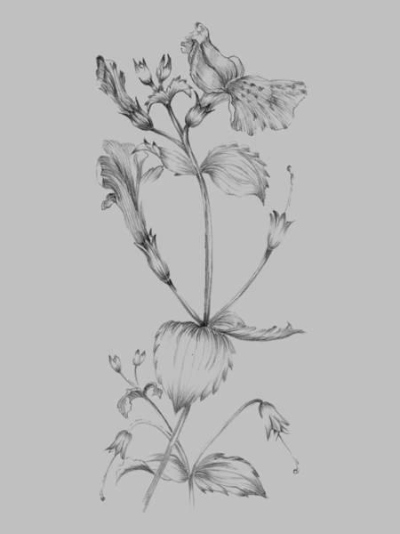 Love Mixed Media - Grey Flower Sketch I by Naxart Studio