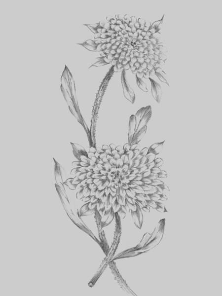 Love Mixed Media - Grey Flower Sketch Illustration II by Naxart Studio