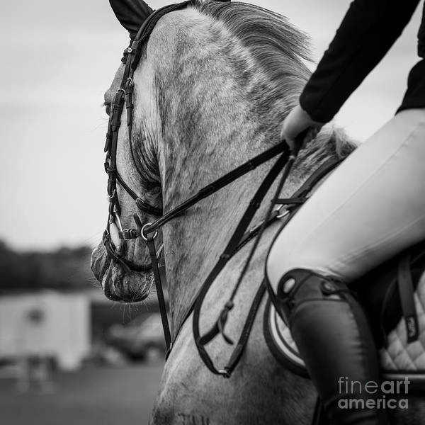 Photograph - Grey Showjumper In Black And White by Michelle Wrighton