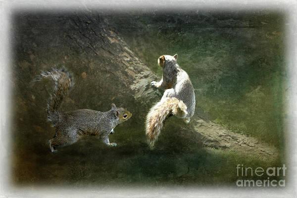 Photograph - Grey Squirrels At Play by Liz Alderdice