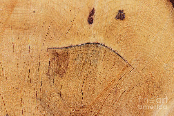 Dour Photograph - Grimace On The Cut Tree Trunk - Funny Face by Michal Boubin