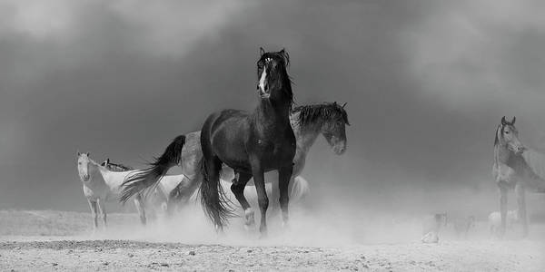 Heber Springs Photograph - Gritty October Stallions by Paul Martin