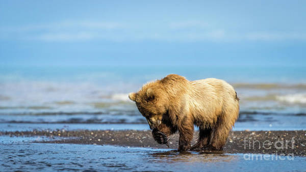 Photograph - Grizzly Bear On The Shore by Lyl Dil Creations