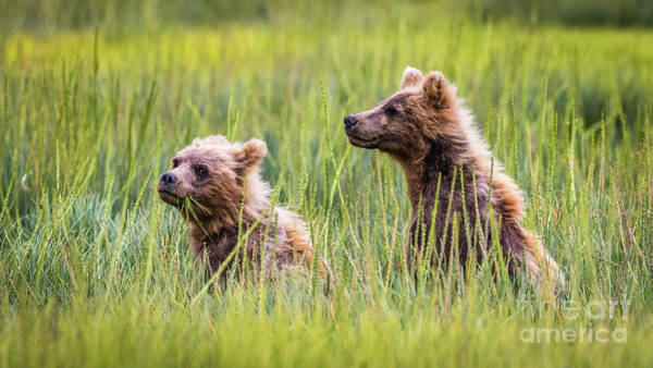 Photograph - Grizzly Cubs by Lyl Dil Creations