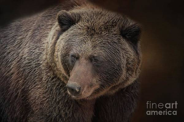 Photograph - Grizzly Bear by Eva Lechner