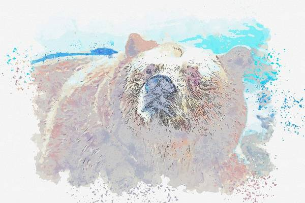 Wall Art - Painting - Grizzly Bear In Alaska, Usa -  Watercolor By Adam Asar by Celestial Images