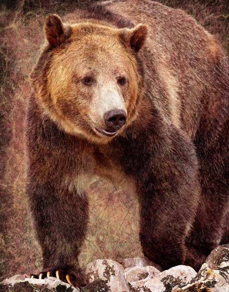 Photograph - Grizzly by Mary Hone